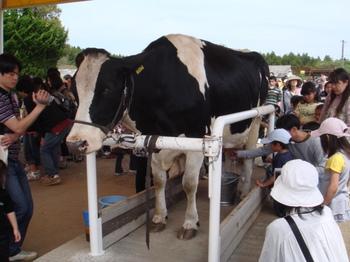 motherfarm_11.JPG